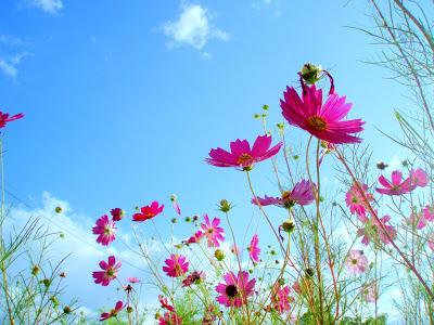 весна и рассеянный склероз